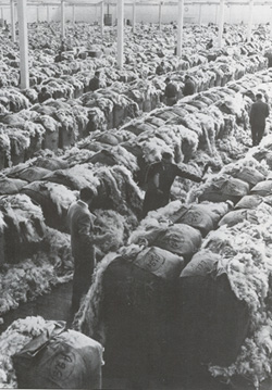 A traditional showfloor with bales opened for buyers to value by 'hand and eye'