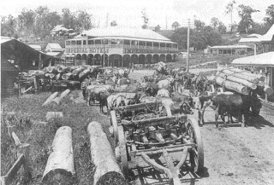 Bullock teams at a small country town in the 1920s