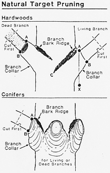A Guide to Correct Pruning
