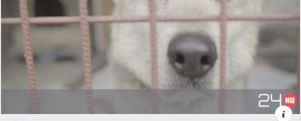 Idős kutyát örökbe fogadni az igazi önzetlenség, szeretet és boldogság! ❤