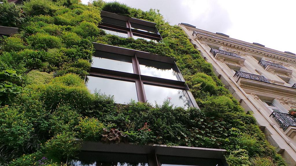 Grüne Fassade