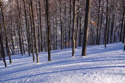 bosco-inverno