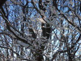 inverno 2