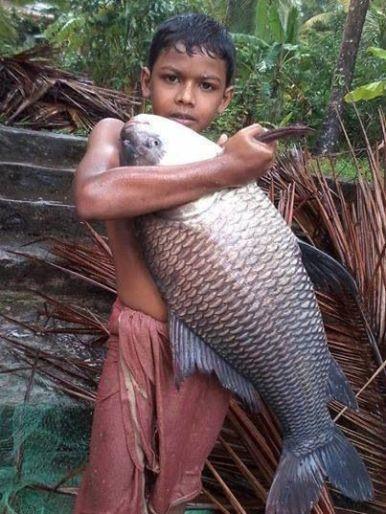Katla fish-1