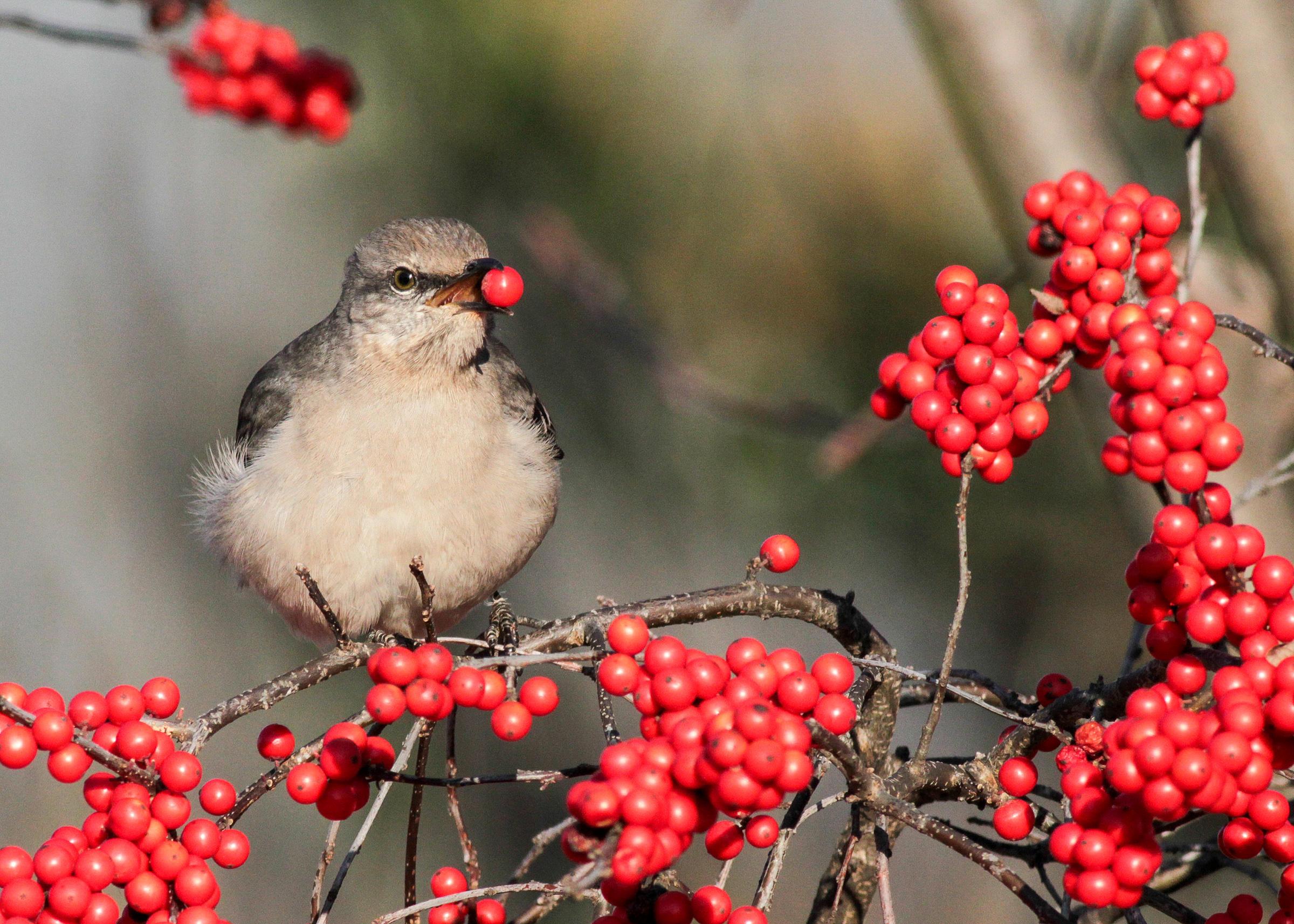 Audubon Society Christmas Cards Christmas Lights Card