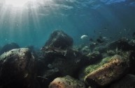 The rock reef teeming with life