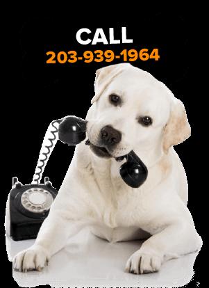 Retriever Puppies For Sale Near Me : retriever, puppies, Golden, Retriever, Puppies, Sale:, English, Cream,, White,, Breeder