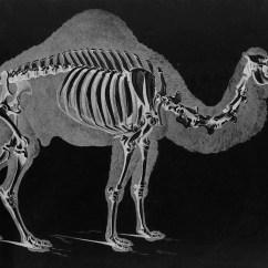 Duck Skeleton Diagram Yamaha Xs650 Wiring Bird Bone Structure Blank Elsavadorla