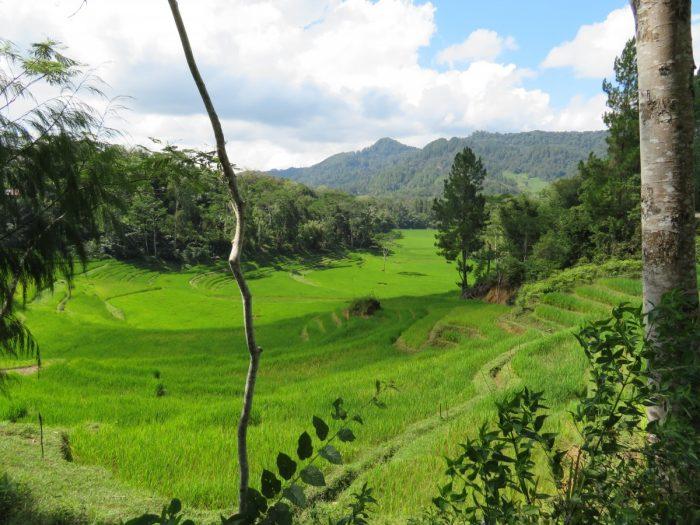 uitzicht op groene rijstterassen