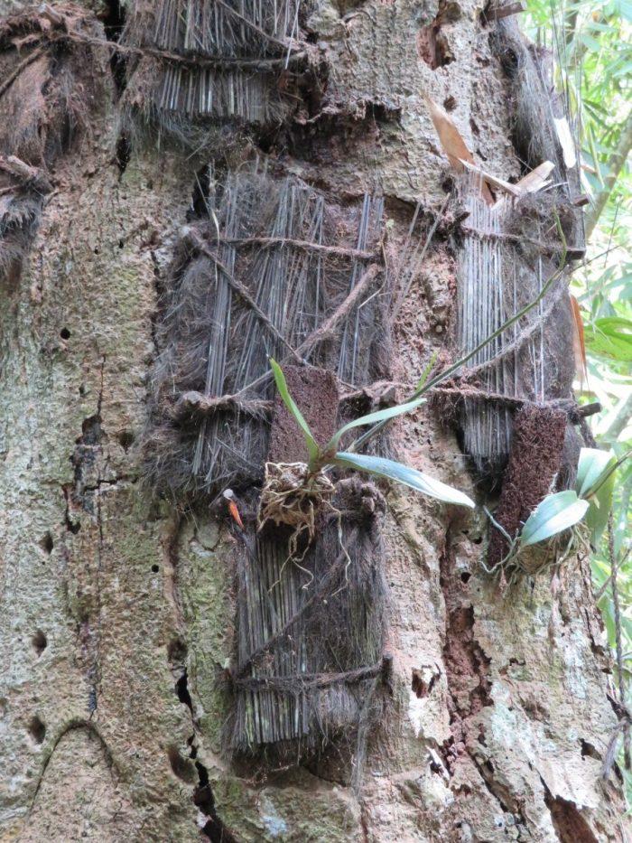 babyboom Sulawesi: drie graven