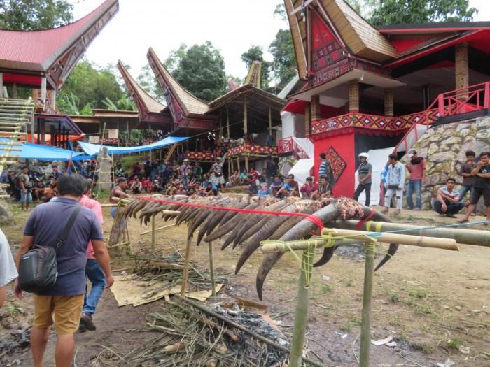 festivalterrein begrafenis: buffelhoorns