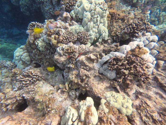 Het koraal bij Two Steps