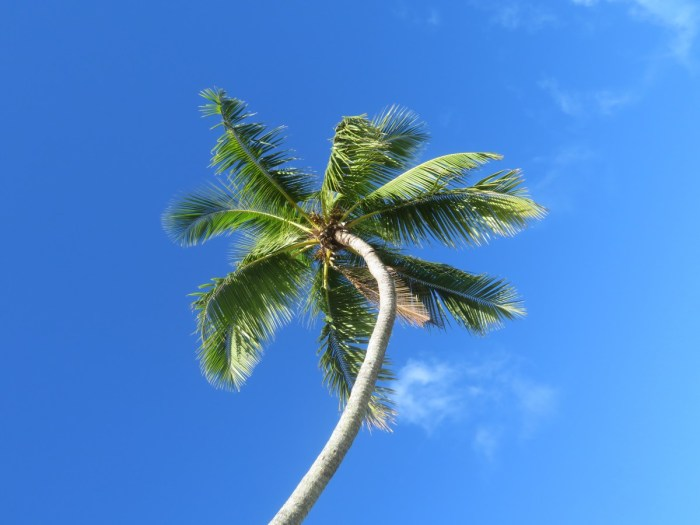 Palmboom tegen blauwe lucht