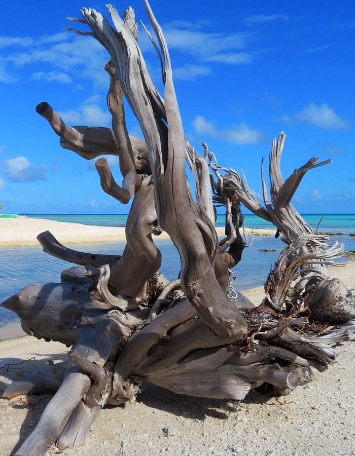 Hout op het strand