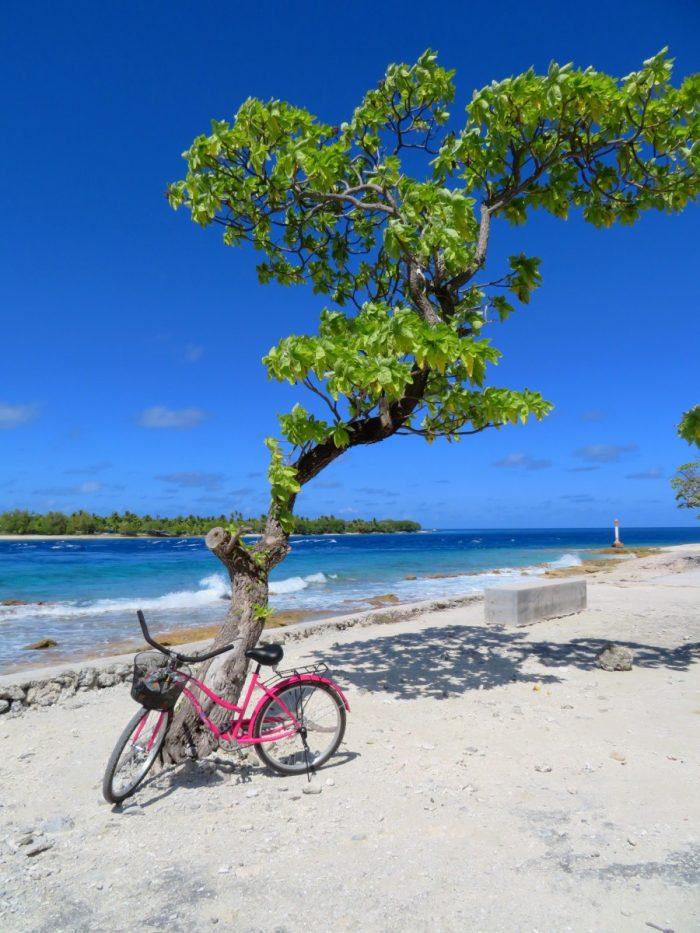 Onze fiets tegen boom