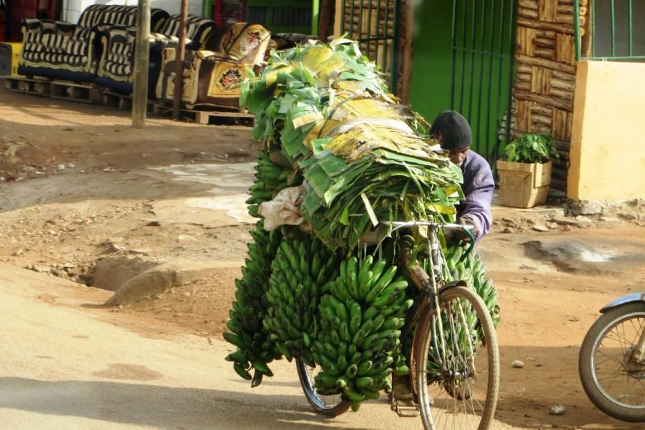 matoke vervoeren op fiets