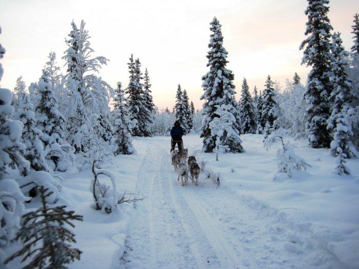 onderweg met husky's