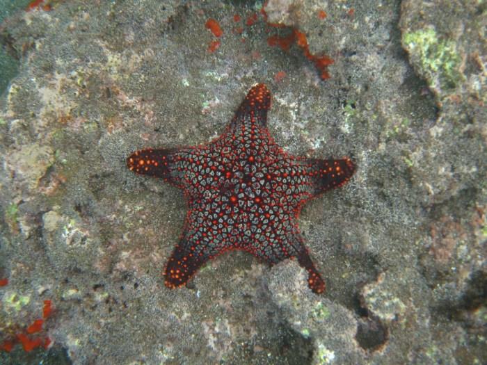 zeester galapagos eilanden