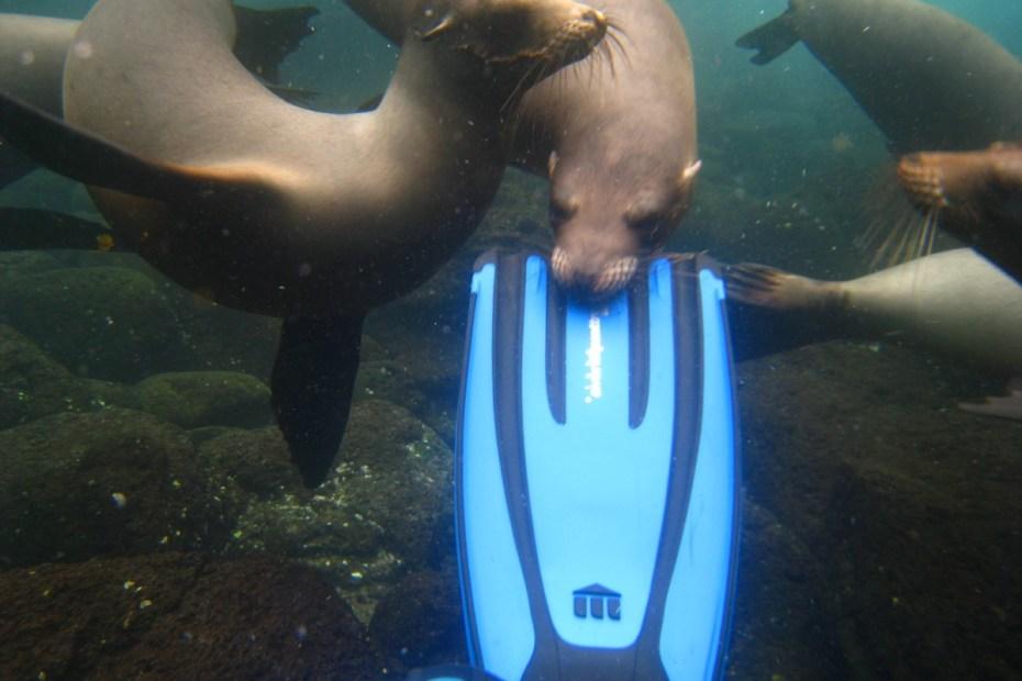 beste locaties duiken of snorkelen Galapagos Eilanden