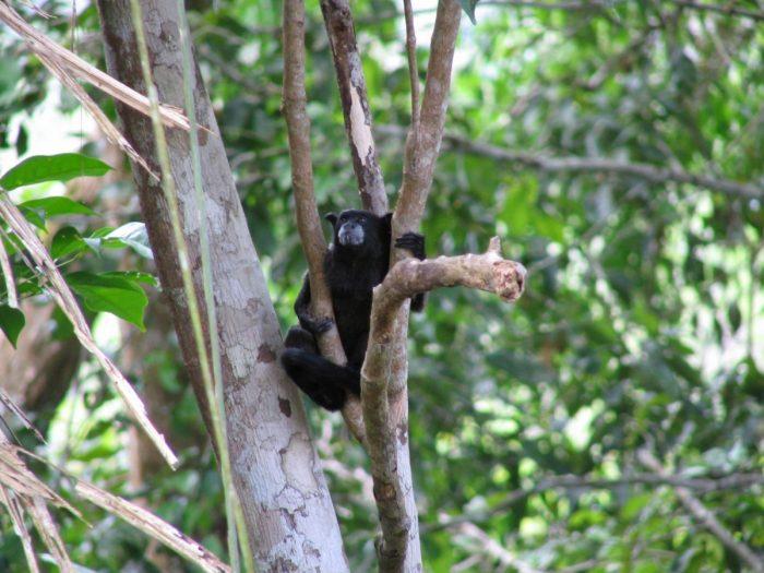 aapjes bij de lodge