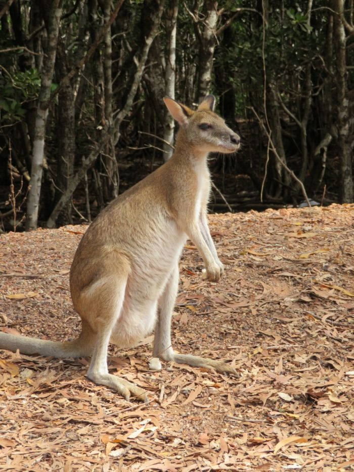 camping kangoeroe