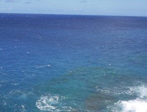 can you see the monk seal?