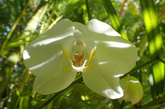 New white orchid I found hiding