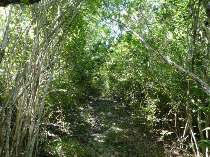 here is what the path looks like