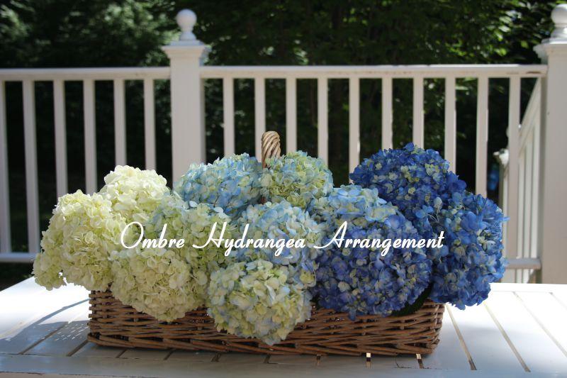 Ombré Hydrangea Flowers