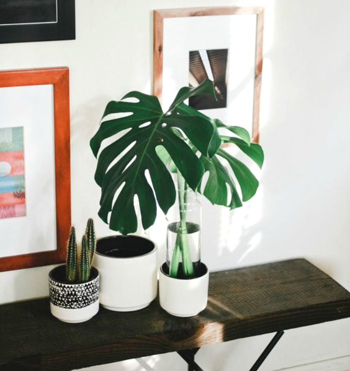 Five Easy Care Houseplants