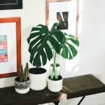Five Easy Care Houseplants