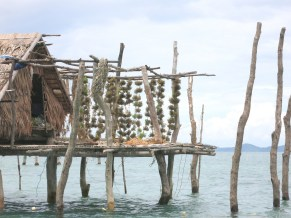 Seaweeds are dried outside stilt houses in Taytay.