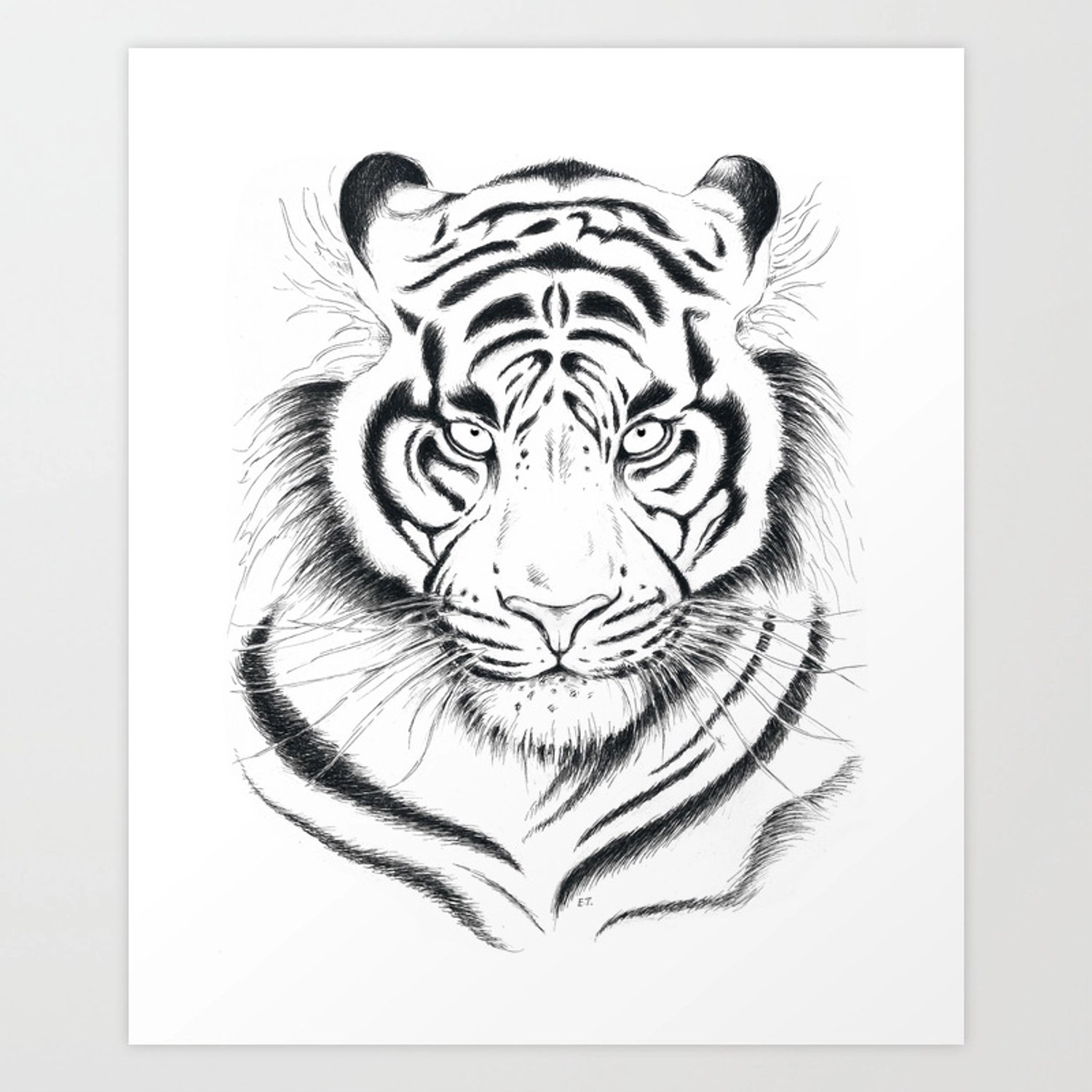 White Bengal Tiger Ink Drawing Art Print By Eveystudios Society6
