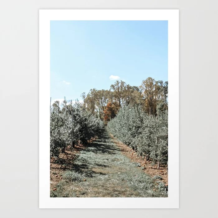 Apple Fields Art Print | Dreamery Events || Society6