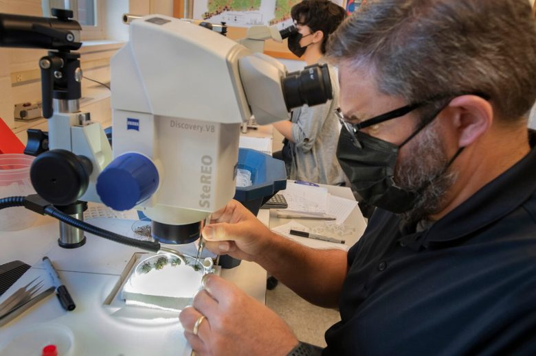 Assistant Scientist John Shepard (front) and laboratory research assistant Catherine Goncalves sort mosquitoes collected from traps in the New Haven area