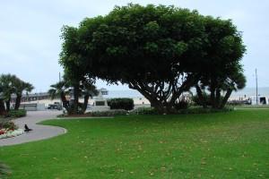 Eisenhower_park-1