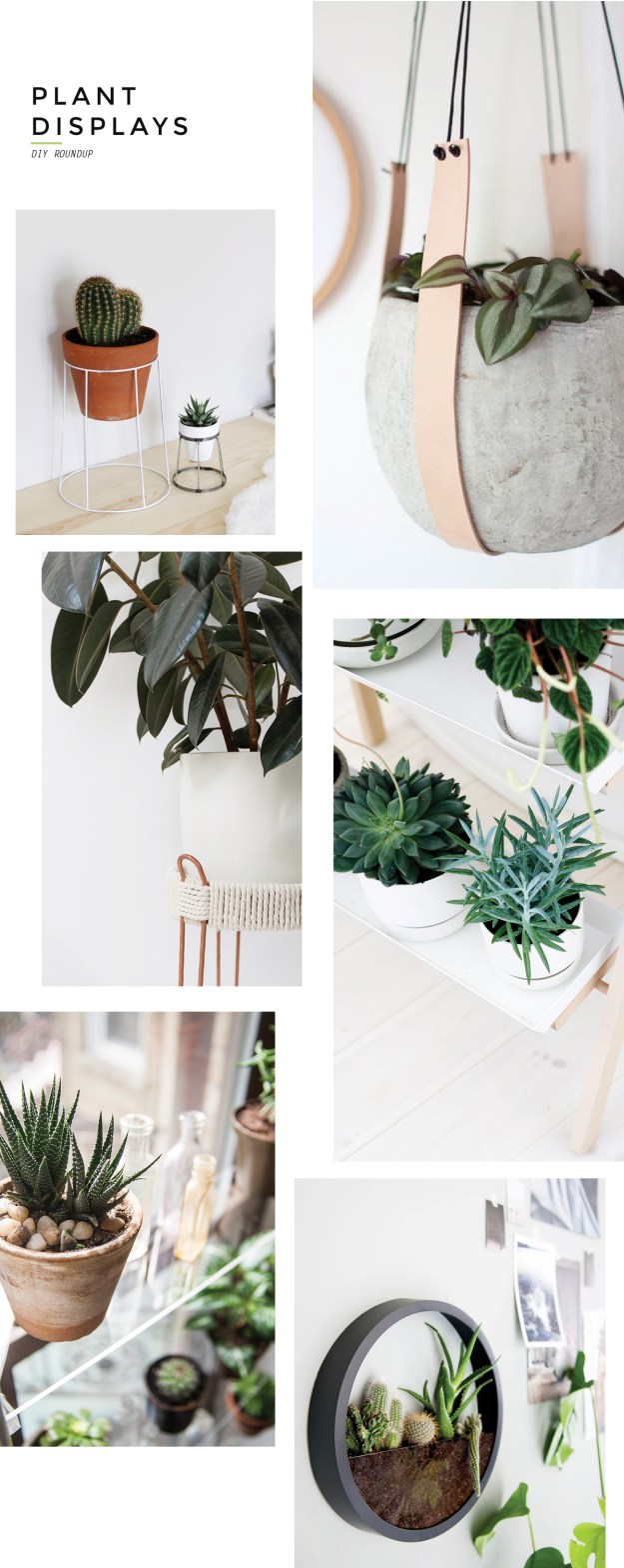 branch out modern diy plant displays