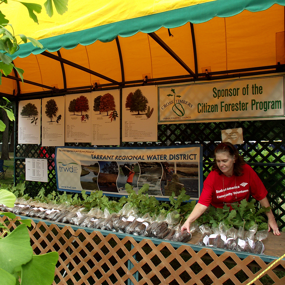 A Bank of America Volunteer lines up bur oak seedlings at the Mayfest Tree Give-a-way Booth sponsored by Cross Timber Urban Forestry Council - 1000