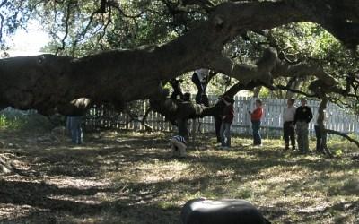 Big Tree Tour