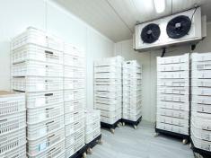 Tìm hiểu quy trình bảo trì kho lạnh hàng đầu hiện nay