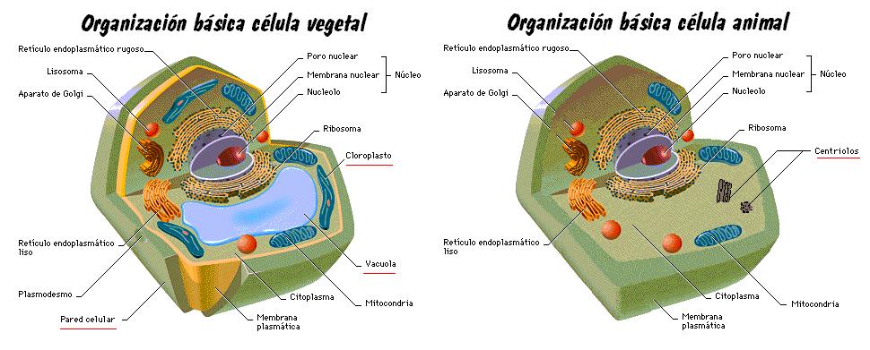 Maqueta De Celula De Planta 3d