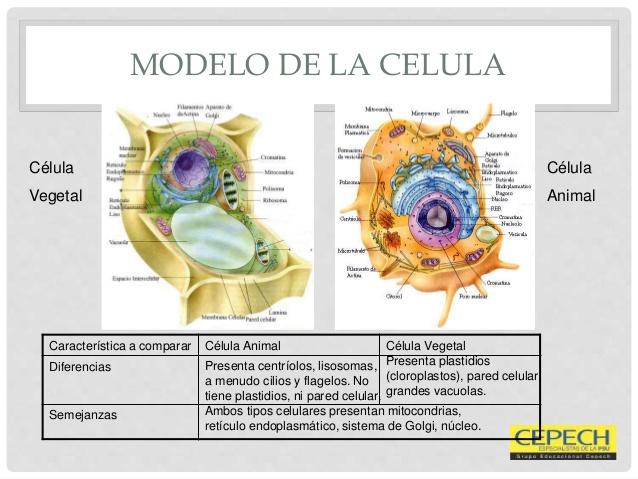 Celulas Citologia Neocologica