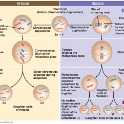 Stages Of Mitosis And Meiosis Diagrams Dc Ammeter Shunt Wiring Diagram Cuadros Comparativos Sobre Y Cuadro