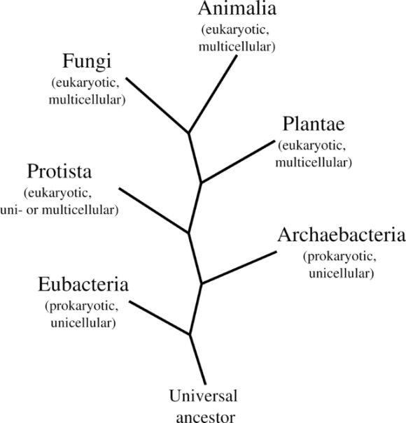 Último antepasado común universal