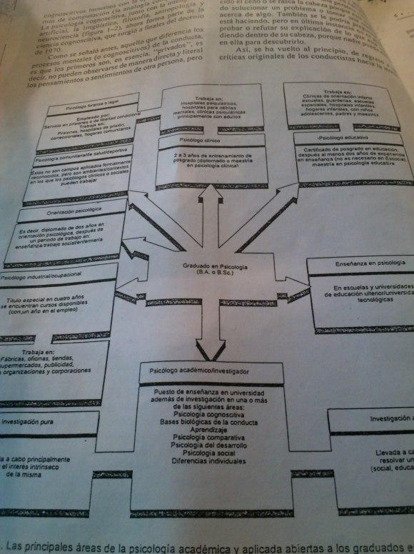 Las principales áreas de la psicología académica y aplicada abiertas a los graduados de psicología