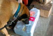 Binomios-Caninos-de-la-Policia-Federal