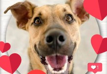 amor perro mascota adopcion