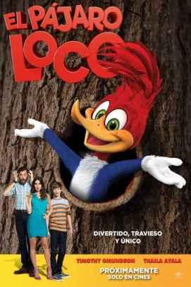 woody_woodpecker_wood