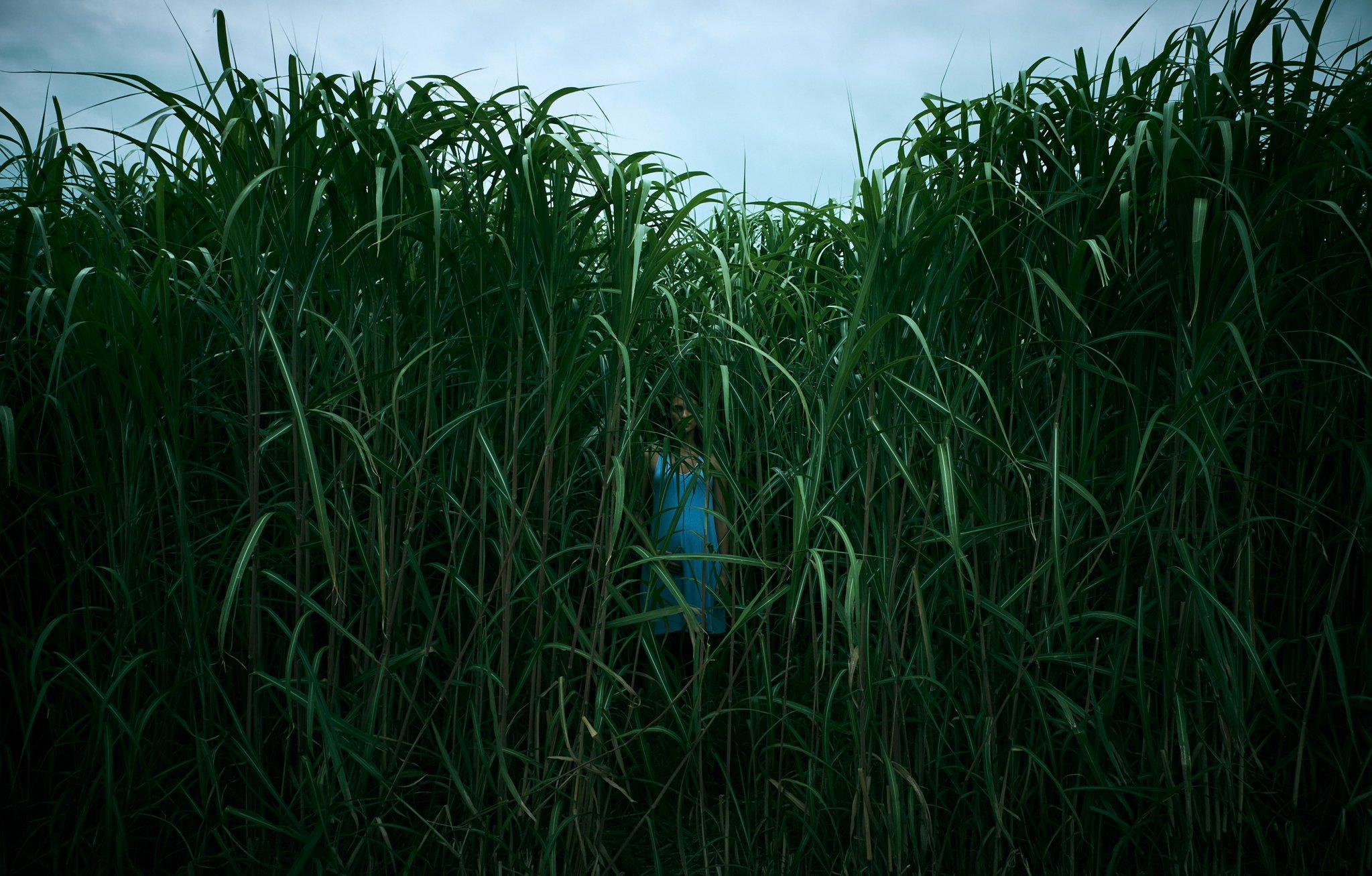 In The Tall Grass.jpg
