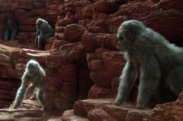 congo-gorilas